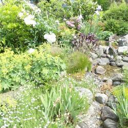 Gartenpflege & Grünschnitt in 31061 Alfeld