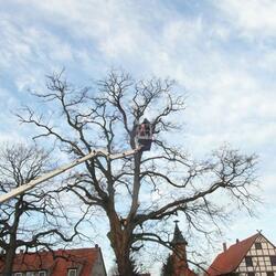 Baumfällungen in 31061 Alfeld
